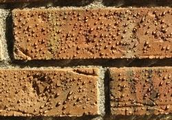 Water beading on treated brick